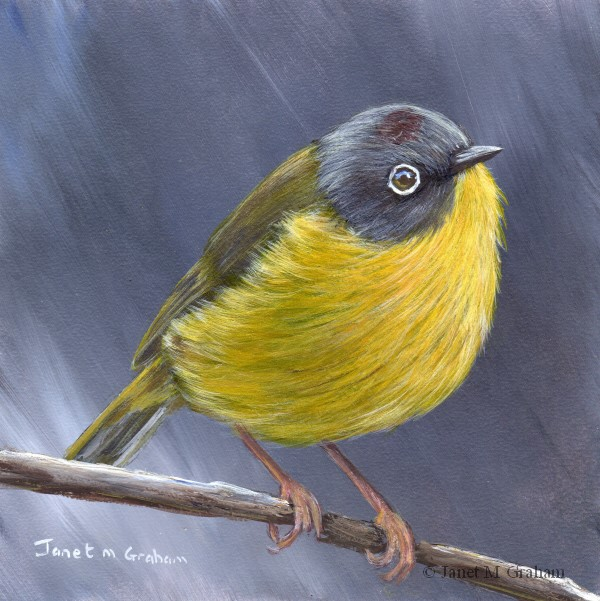 """Nashville Warbler No 2"" original fine art by Janet Graham"