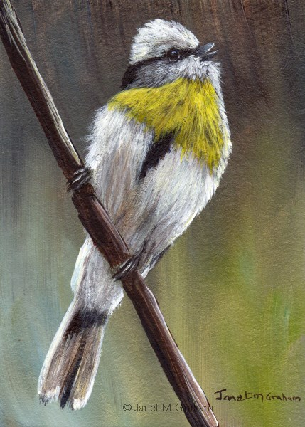 """Yellow Breasted Tit ACEO"" original fine art by Janet Graham"