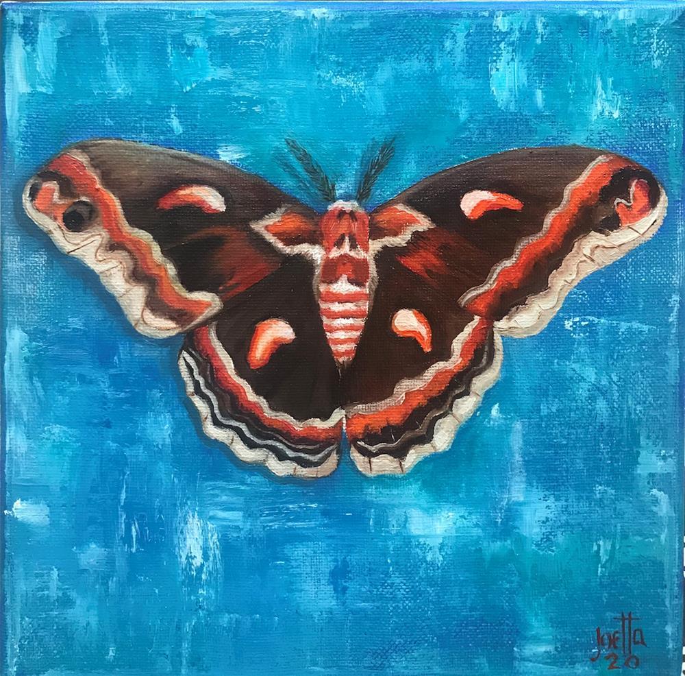"""Cecropia Moth"" original fine art by Joetta Currie"