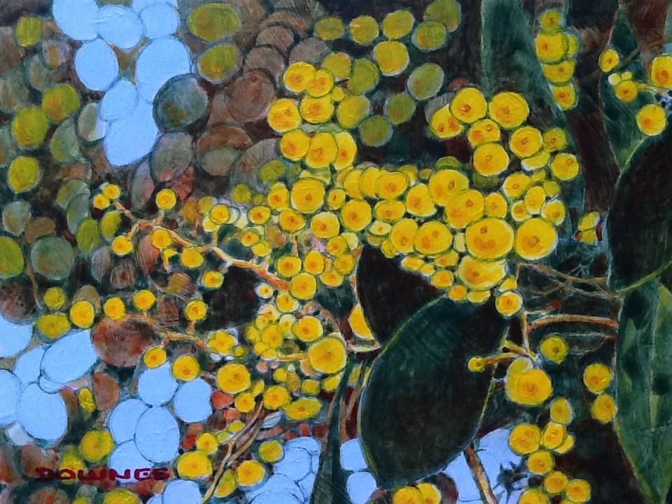"""""""027 WATTLE"""" original fine art by Trevor Downes"""