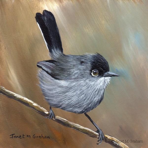 """California Gnatcatcher"" original fine art by Janet Graham"