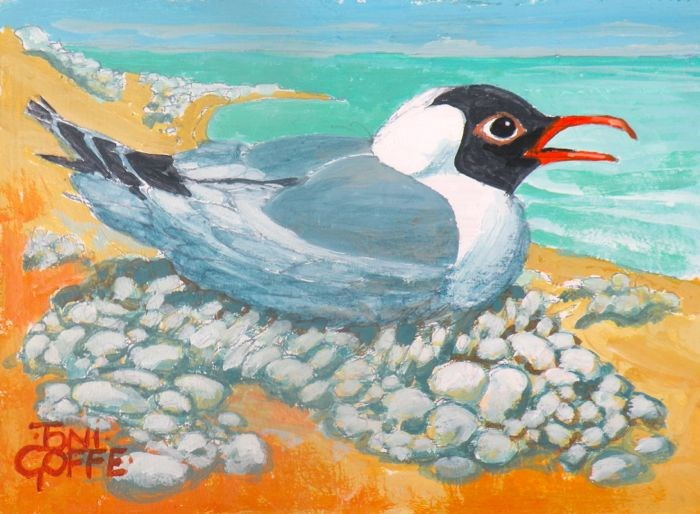 """Black - Headed Gull"" original fine art by Toni Goffe"