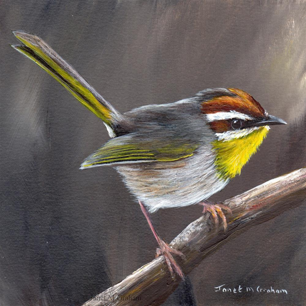 """Rufous Capped Warbler No 5"" original fine art by Janet Graham"