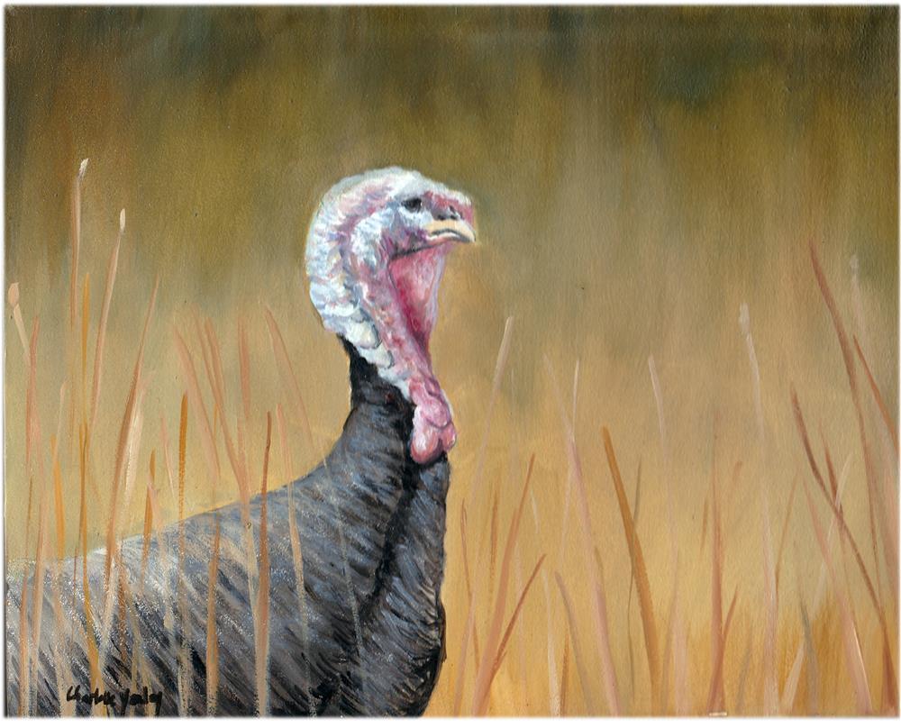 """""""Wild Turkey in Field"""" original fine art by Charlotte Yealey"""