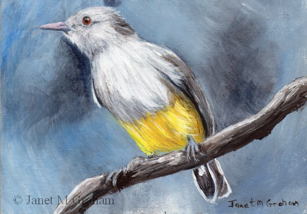 """Yellow Bellied Eremomela ACEO"" original fine art by Janet Graham"