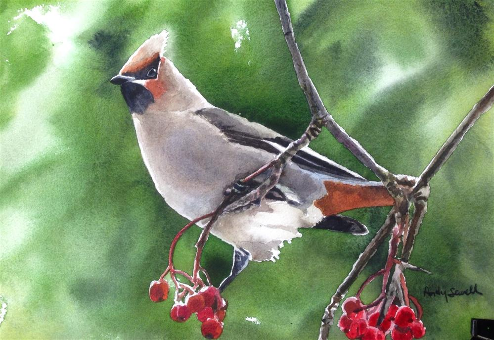 """""""W is for Waxwing"""" original fine art by Andy Sewell"""