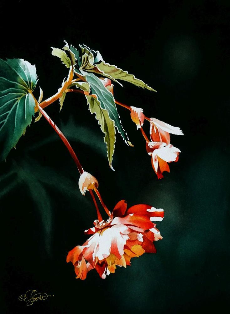 """2017 PlantPeddler Catalog Commission"" original fine art by Jacqueline Gnott, TWSA, WHS"