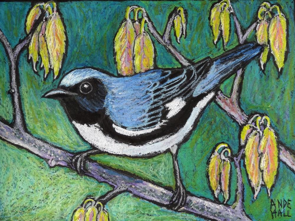 """""""Black Throated Blue Warbler"""" original fine art by Ande Hall"""