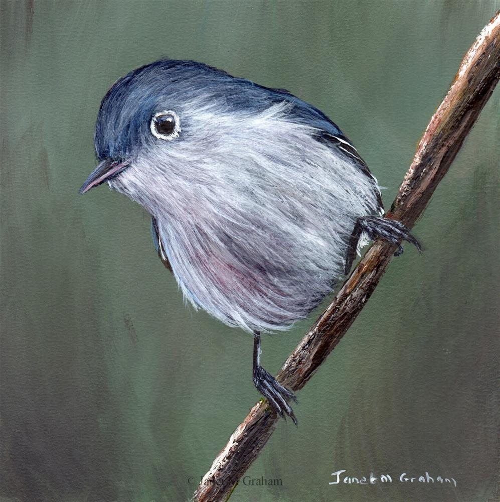 """Blue Gray Gnatcatcher"" original fine art by Janet Graham"