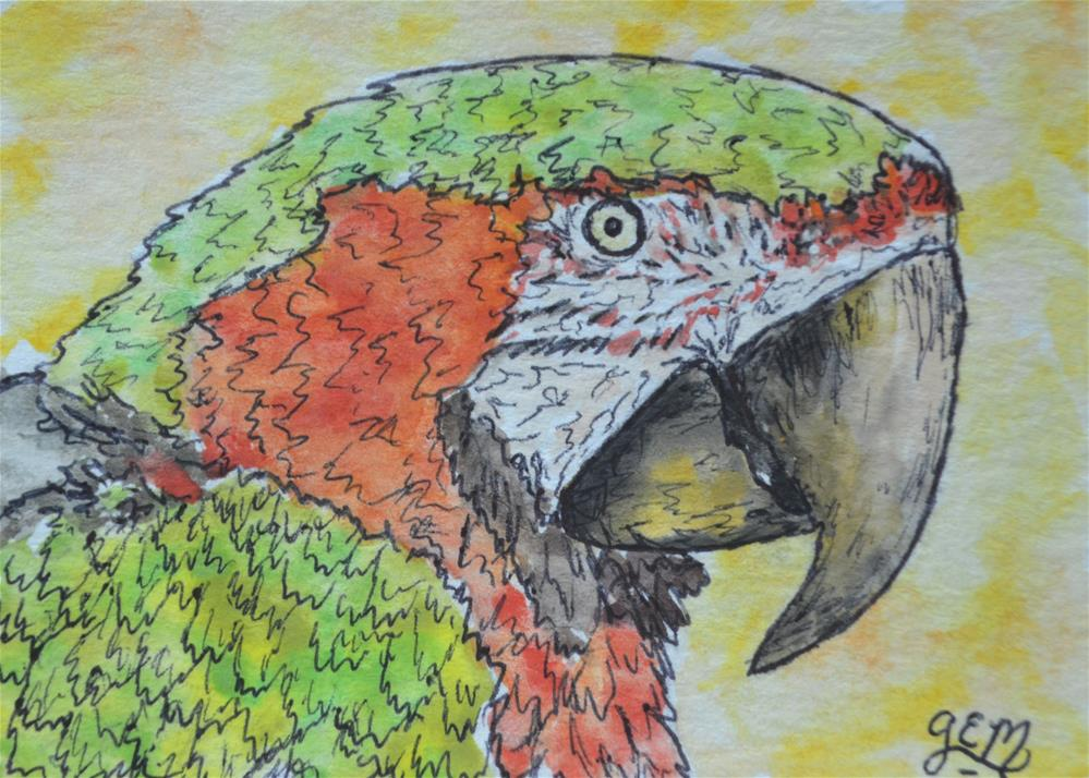 """Parrot Watercolor Aceo"" original fine art by Gloria Ester"