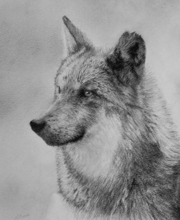 """El Lobo"" original fine art by Linda Mann"