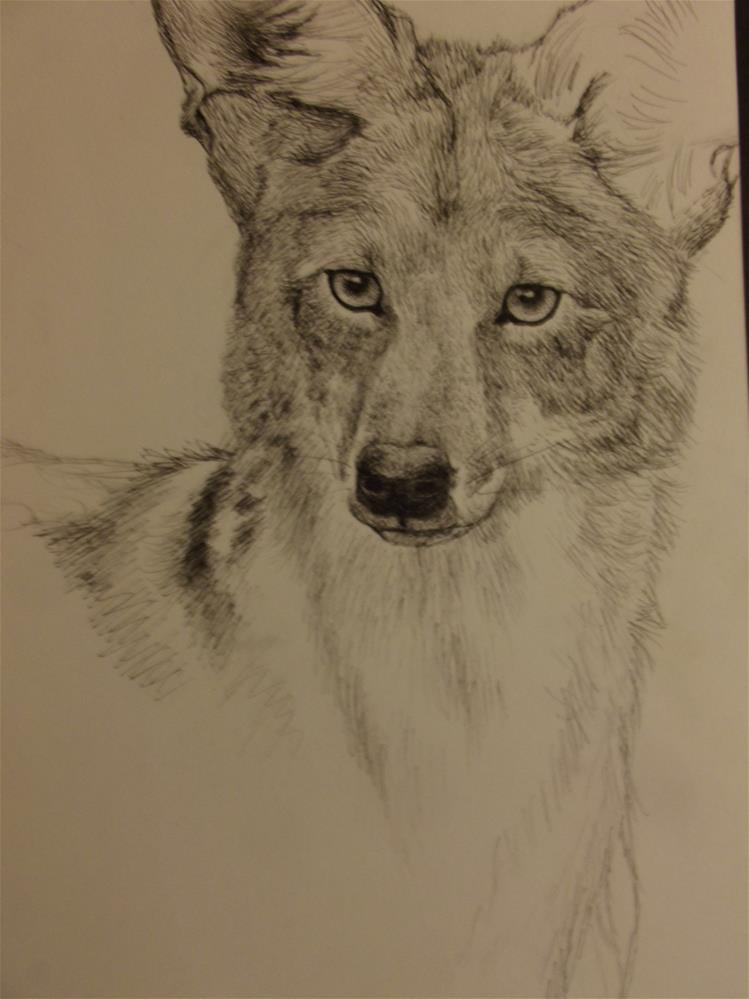 """Coyote"" original fine art by wanda sigafus"