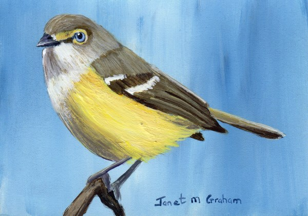"""White Eyed Vireo ACEO"" original fine art by Janet Graham"