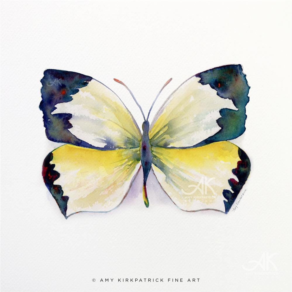 """#55 Mexican Yellow Butterfly #0365"" original fine art by Amy Kirkpatrick"