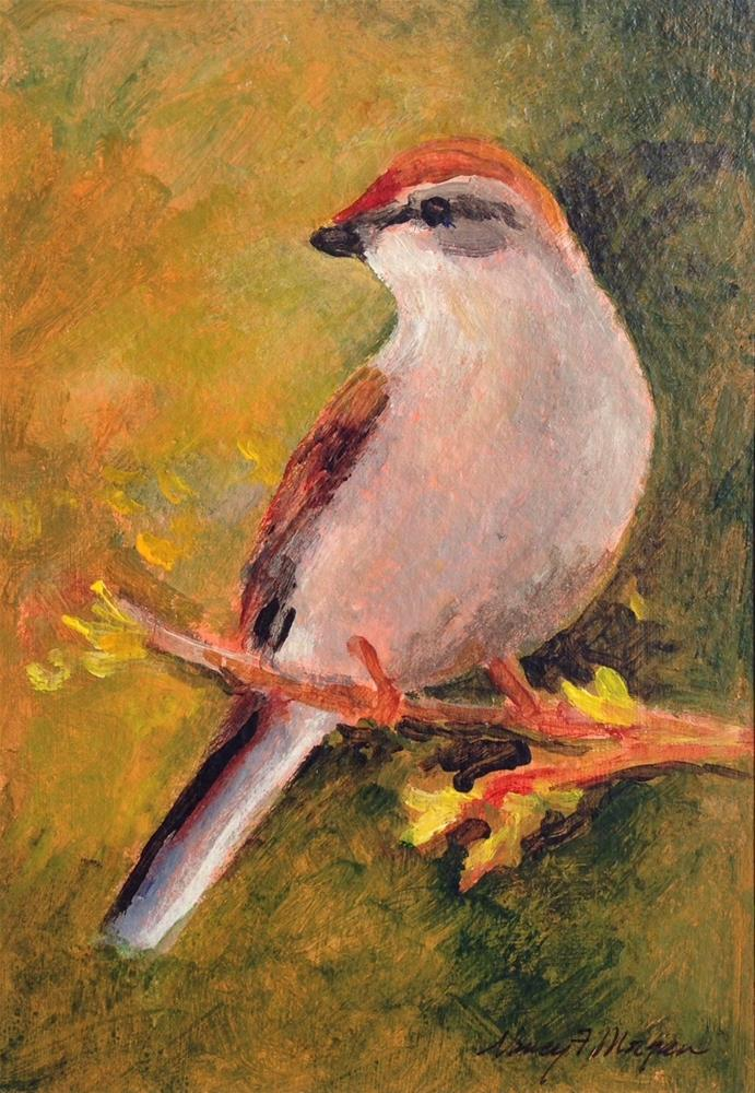 """Chipping Sparrow"" original fine art by Nancy F. Morgan"