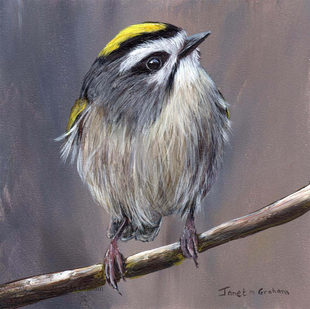 """Golden Crowned Kinglet No 3"" original fine art by Janet Graham"