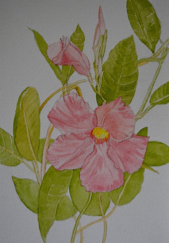 """Mandeville flower"" original fine art by Cathy Bergsing"