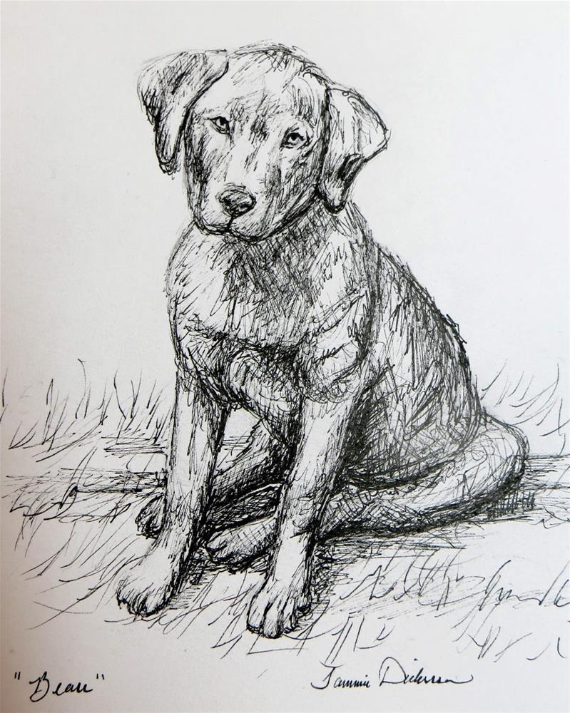 """Beau in Ink"" original fine art by Tammie Dickerson"