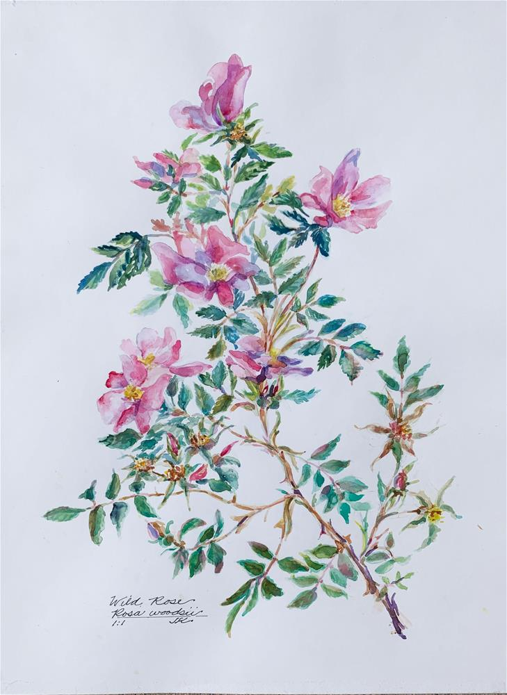 """Wild Rose - rosa woodsii"" original fine art by Jean Krueger"