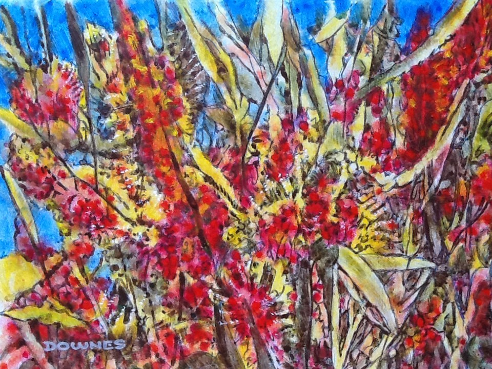 """024 GREVILLEA 3"" original fine art by Trevor Downes"