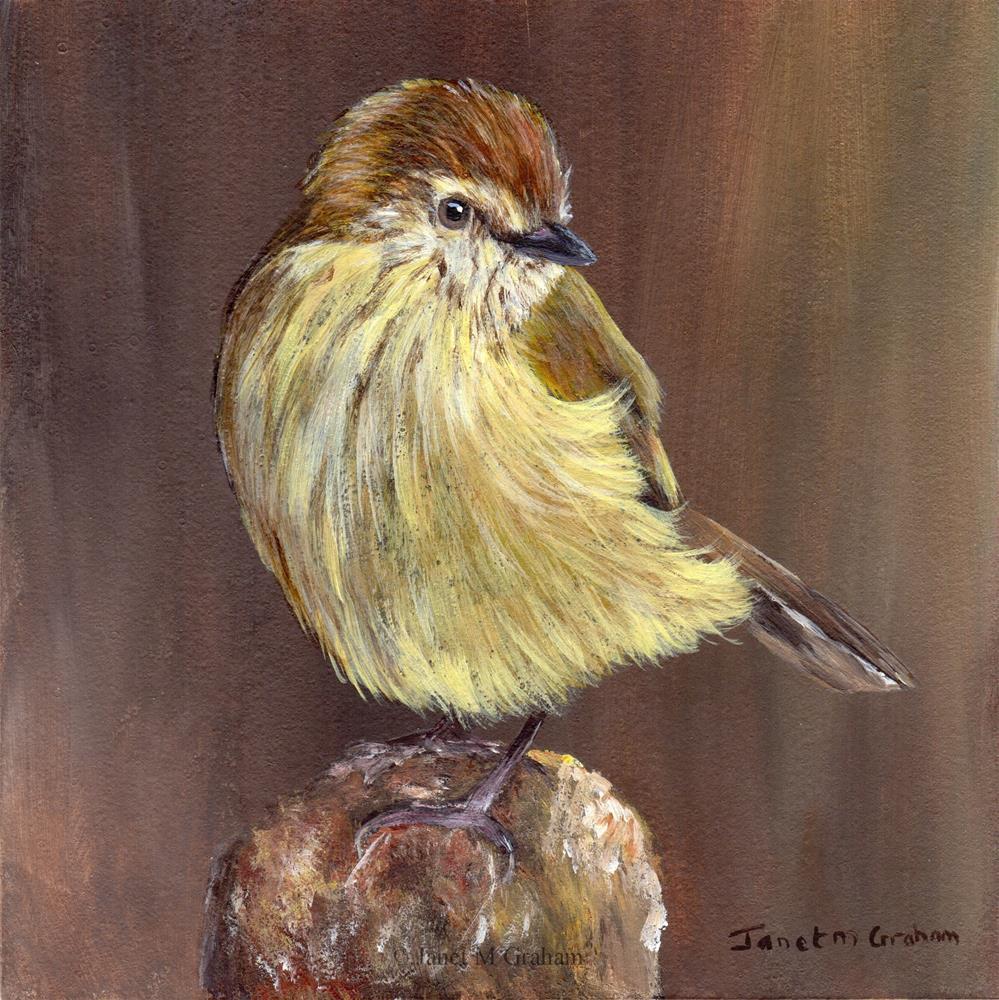 """Striated Thornbill"" original fine art by Janet Graham"