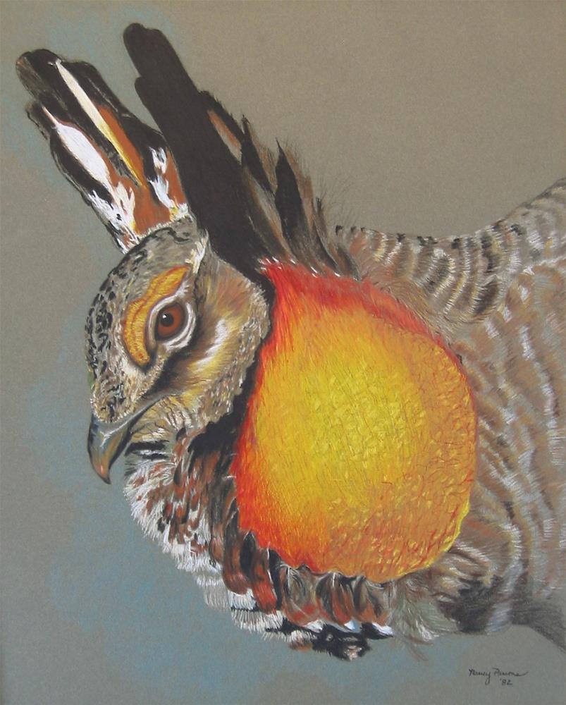 """""""Prairie Chicken"""" original fine art by Nancy Parsons"""