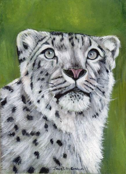 """""""Snow Leopard ACEO"""" original fine art by Janet Graham"""