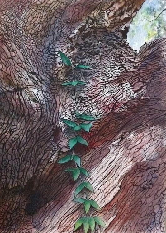 """Live Oak"" original fine art by Patti Adams"