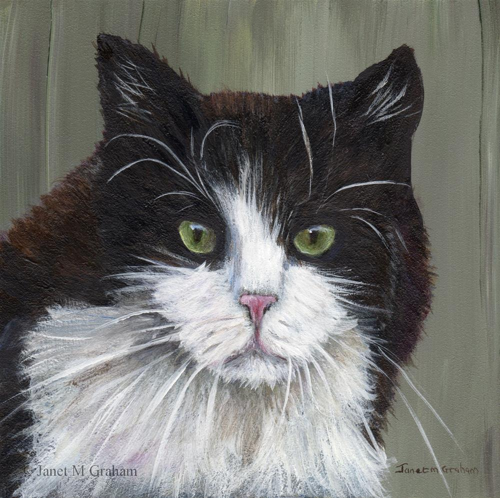 """Black and White Cat"" original fine art by Janet Graham"