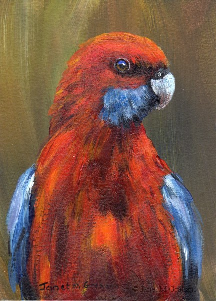 """Crimson Rosella ACEO"" original fine art by Janet Graham"