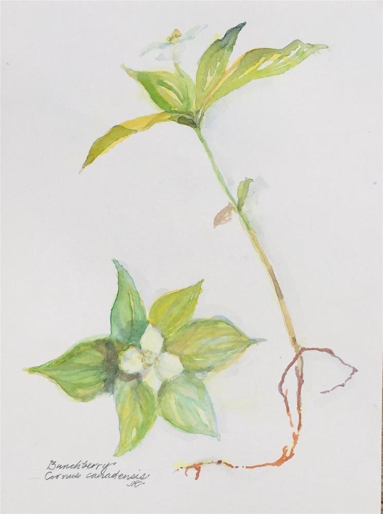 """Bunchberry"" original fine art by Jean Krueger"