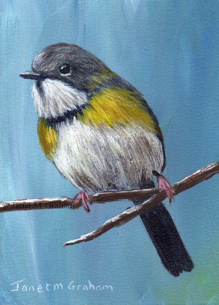 """Rudd's Apalis ACEO"" original fine art by Janet Graham"