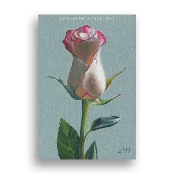 """Pink Lace Rose"" original fine art by Ester Wilson"