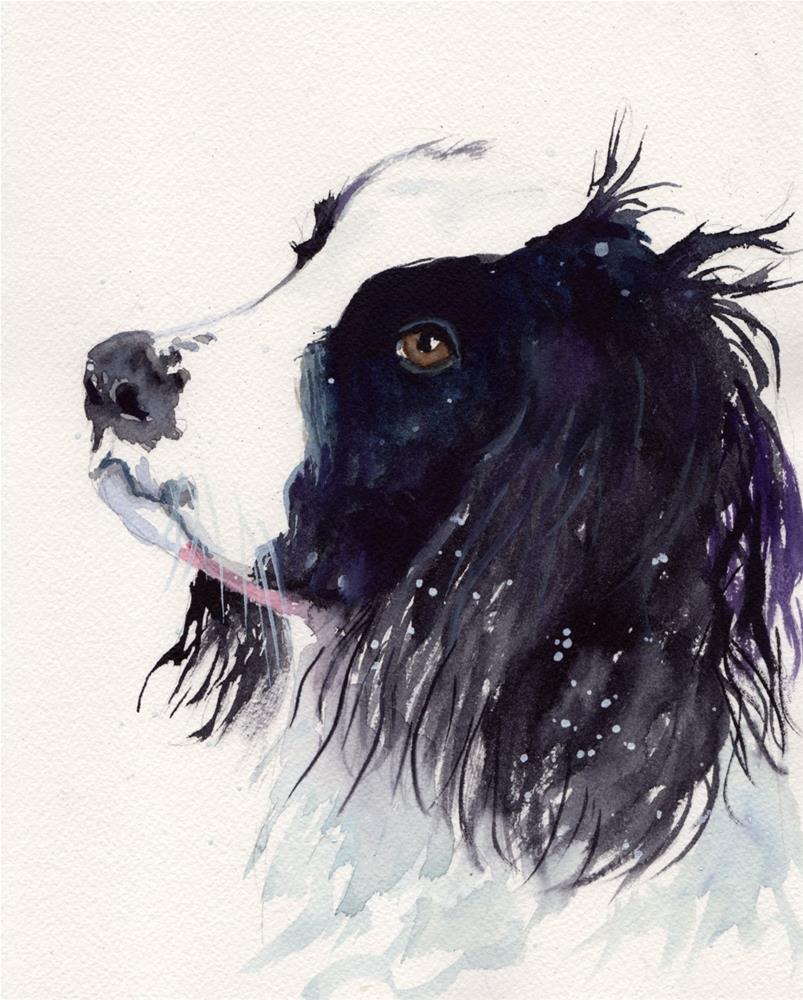 """Springer Spaniel"" original fine art by Bunny Griffeth"