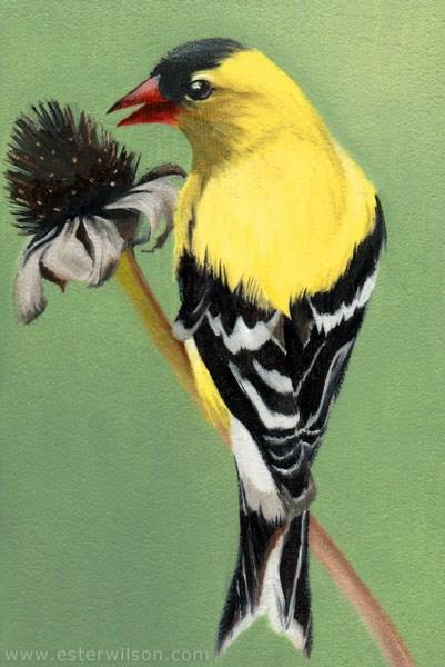"""Goldfinch"" original fine art by Ester Wilson"