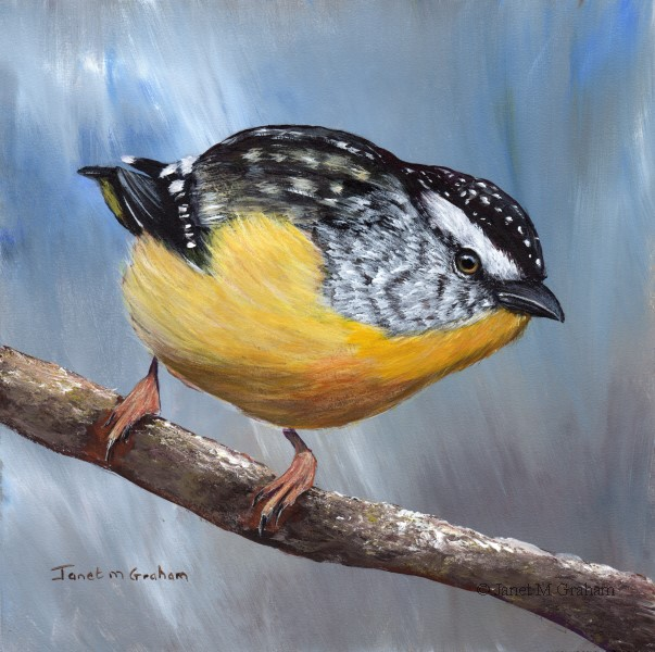 """""""Spotted Pardalote No 6"""" original fine art by Janet Graham"""