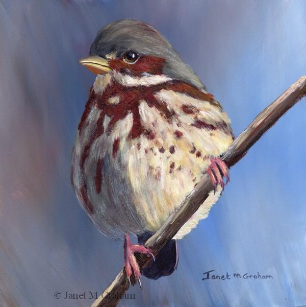 """Fox Sparrow"" original fine art by Janet Graham"