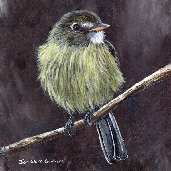 """""""Dusky Flycatcher"""" original fine art by Janet Graham"""