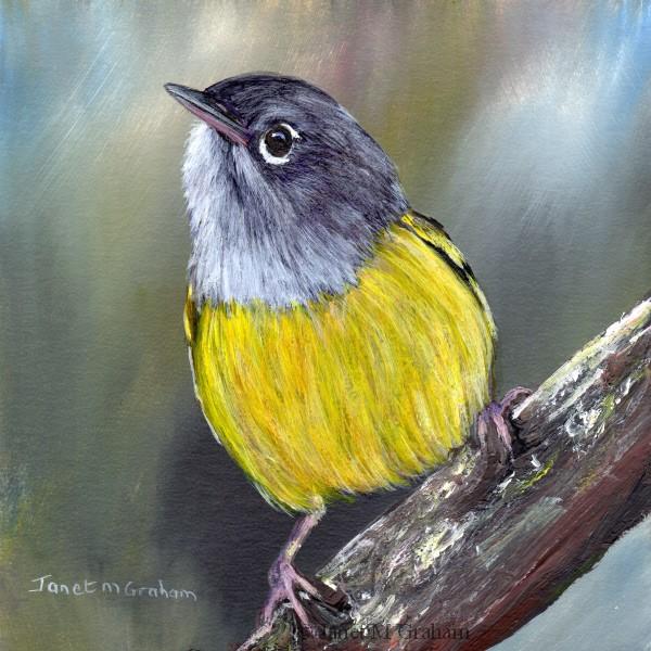 """Macgillivray's Warbler No 2"" original fine art by Janet Graham"