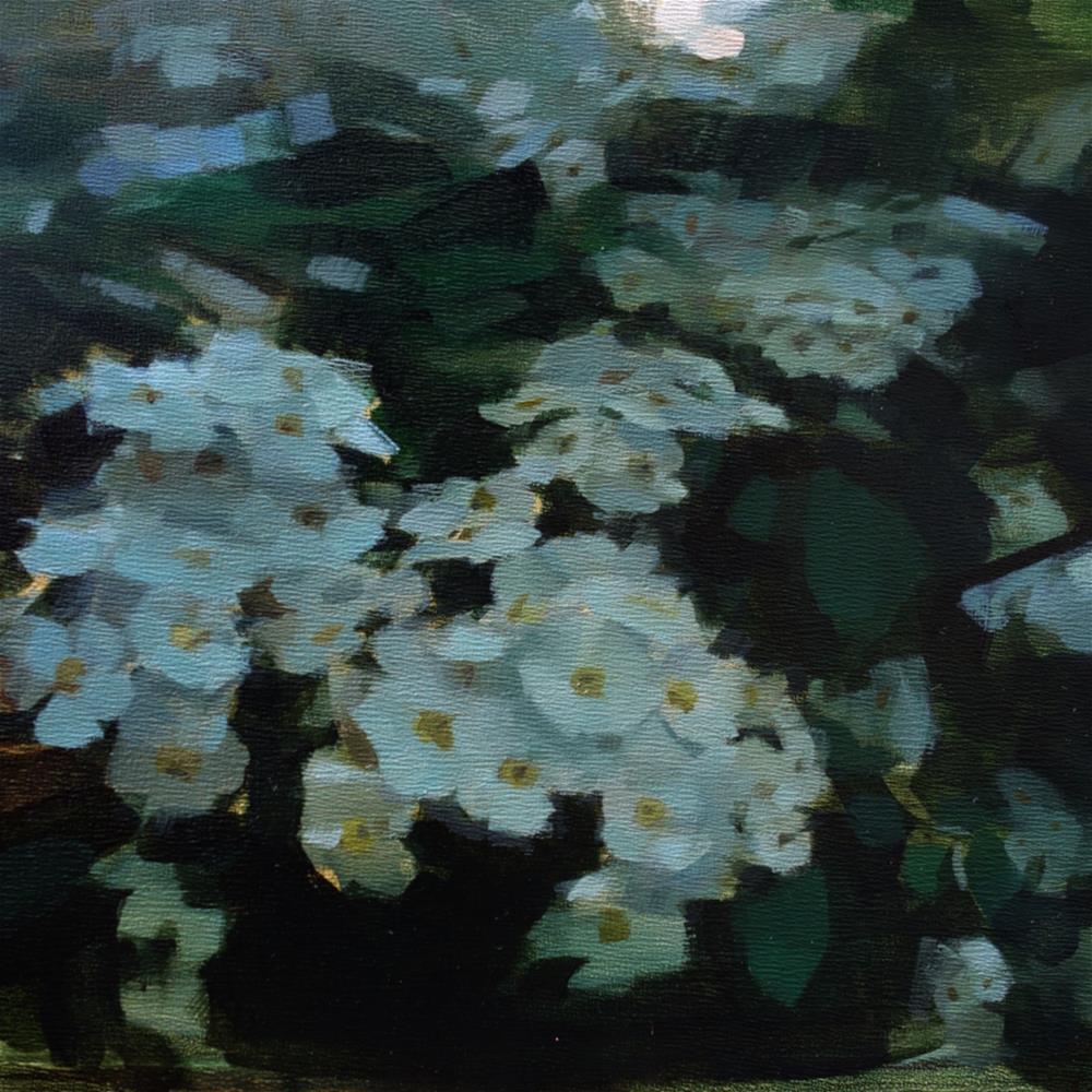"""White Meadowsweet (no.136)"" original fine art by Michael William"