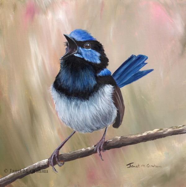 """Superb Fairy Wren No 25"" original fine art by Janet Graham"