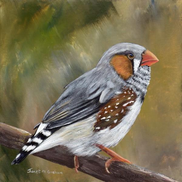 """Zebra Finch No 2"" original fine art by Janet Graham"