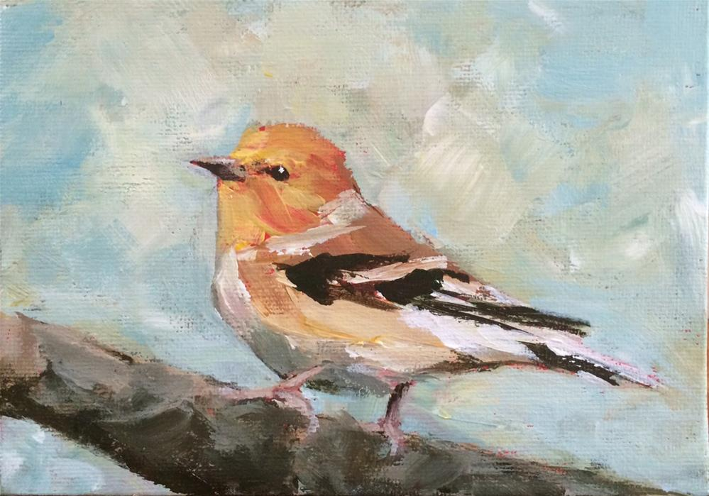 """Cheery Finch"" original fine art by Shannon Bauer"