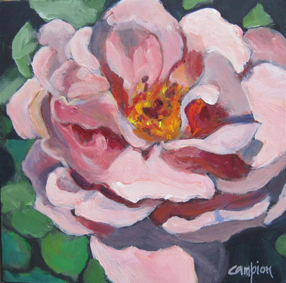 """134 Peach Rose"" original fine art by Diane Campion"