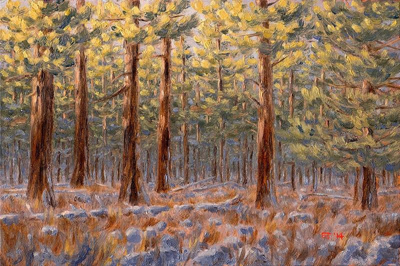 """C1593 Winter Dawn amongst the Ponderosas (near Hole-in-the-Ground, Oregon High Desert)"" original fine art by Steven Thor Johanneson"