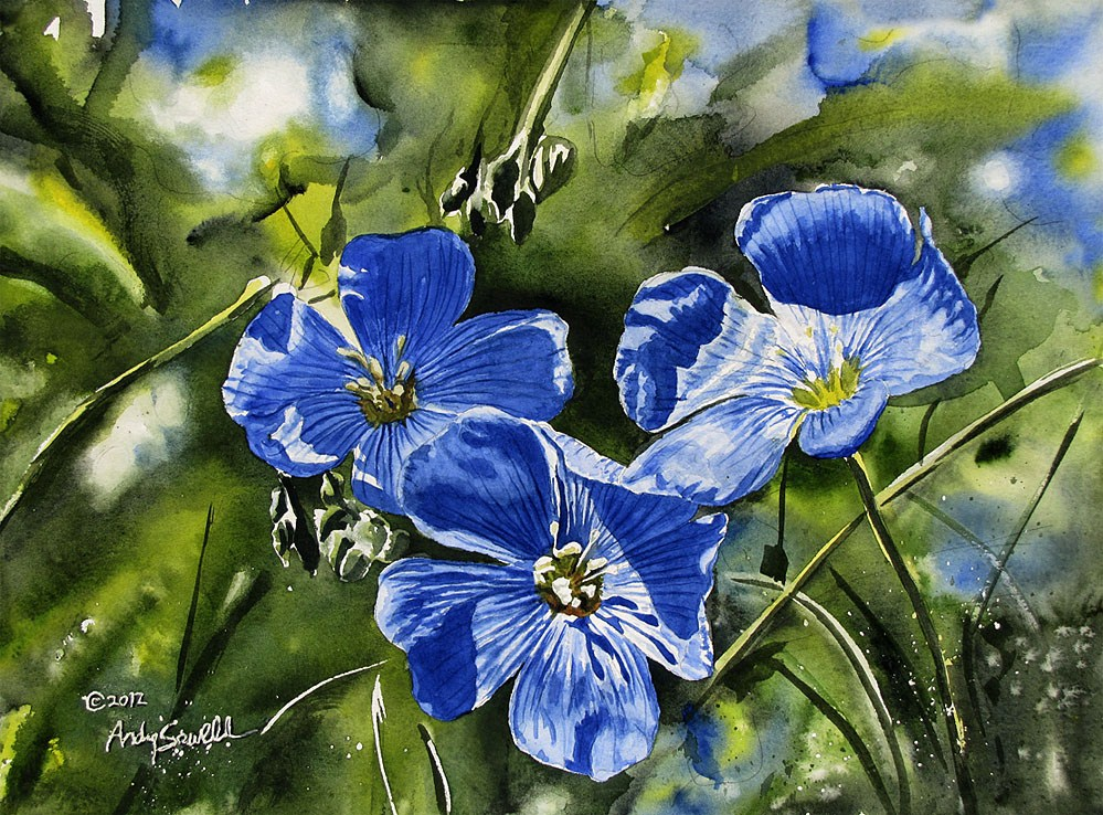 """""""Blue Flax"""" original fine art by Andy Sewell"""