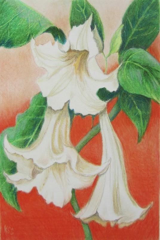 """""""Datura, Angel Trumpets"""" original fine art by Karen Stitt"""