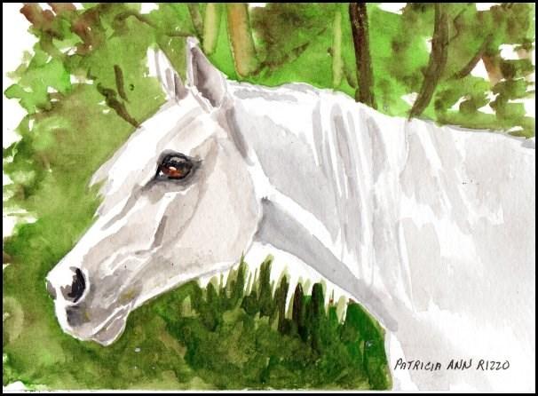 """Big White Stallion"" original fine art by Patricia Ann Rizzo"