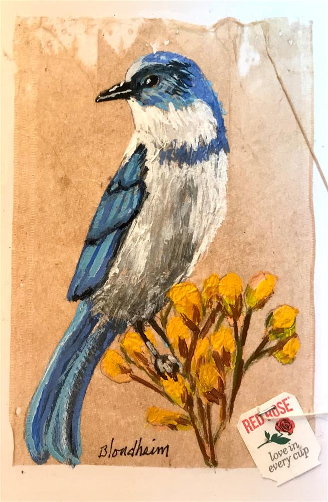 """Tea Bag Painting Scrub Jay"" original fine art by Linda Blondheim"