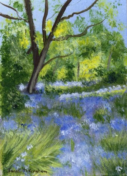 """Bluebells ACEO"" original fine art by Janet Graham"